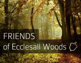 Friends of Ecclesall Woods Branding & Wesbite
